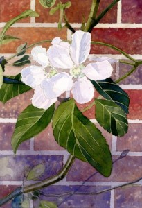 the truth about watercolour apple blossom